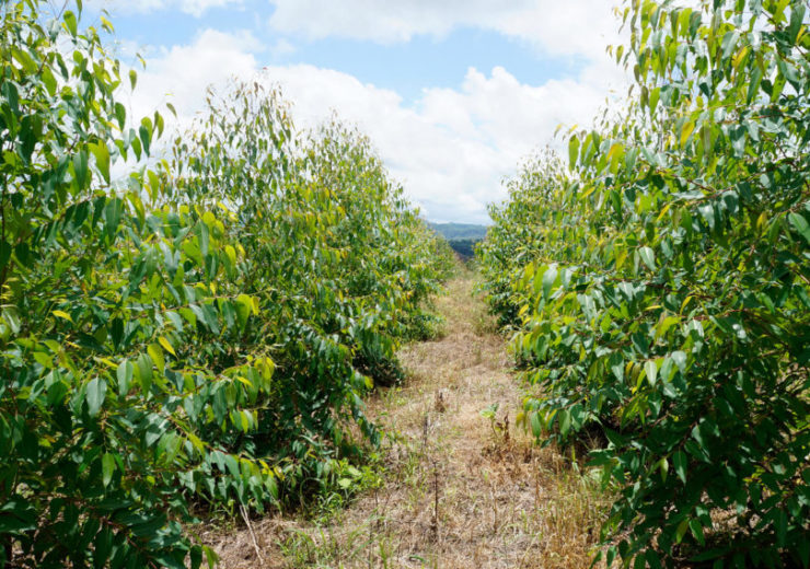 IFC to provide £12.3m loan to Colombian forestry company Reforestadora del Sinú