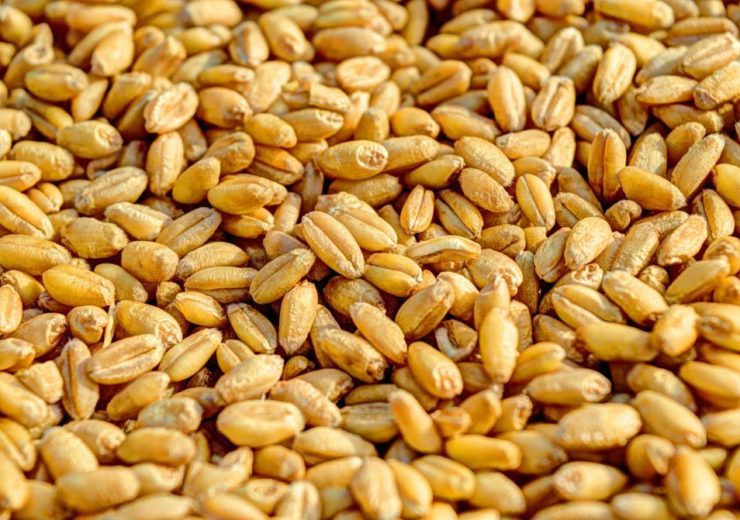 Arcadia Biosciences wins US patent for reduced gluten grains