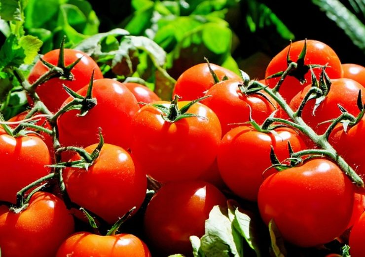 US Commerce Department to remove duties on import of Mexican tomatoes