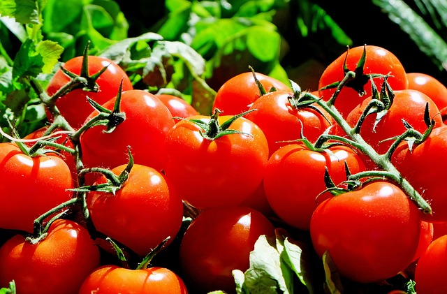 Image: Mexican Tomato Growers sign agreement with US Commerce Department. Photo: Courtesy of Couleur from Pixabay.