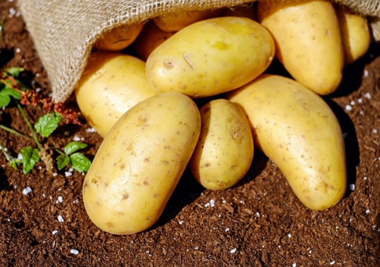 Yield10, J. R. Simplot collaborate to study novel yield traits in potato