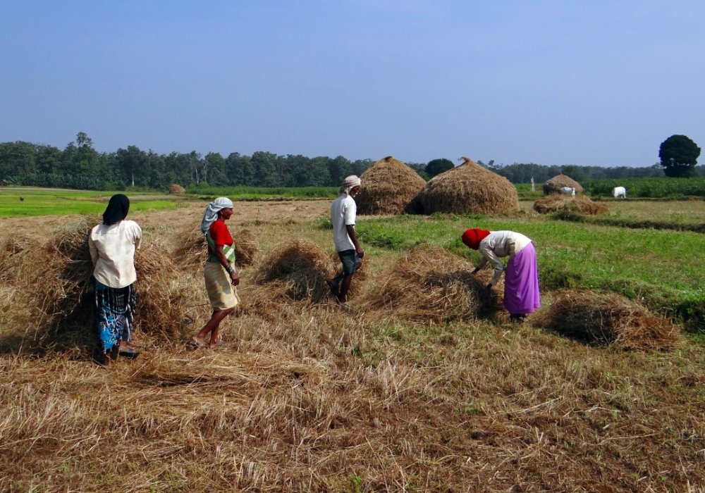 How the UN's rural development agency is looking to support farmers in India