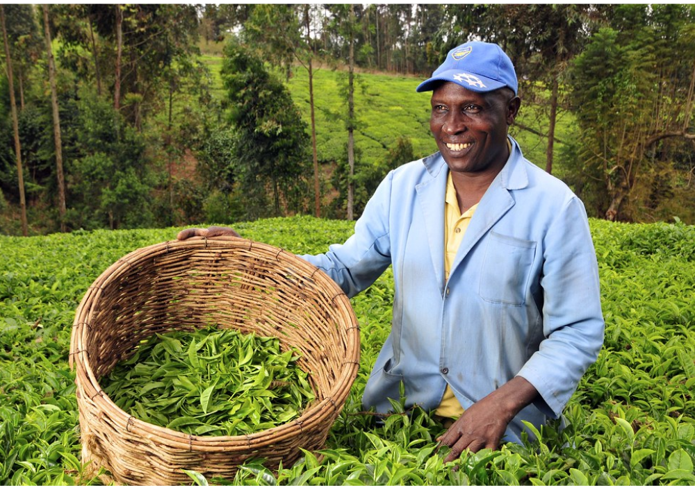 Research shows 70% of people living in rural areas of Kenya are farmers (credit: CIAT)
