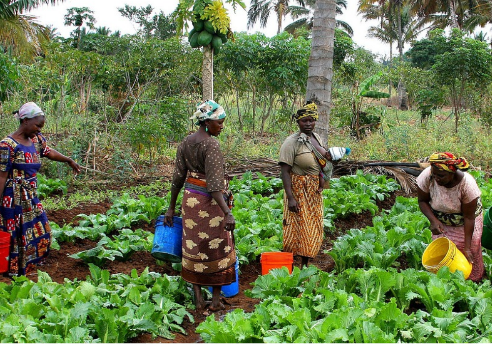 Farmers in Kenya