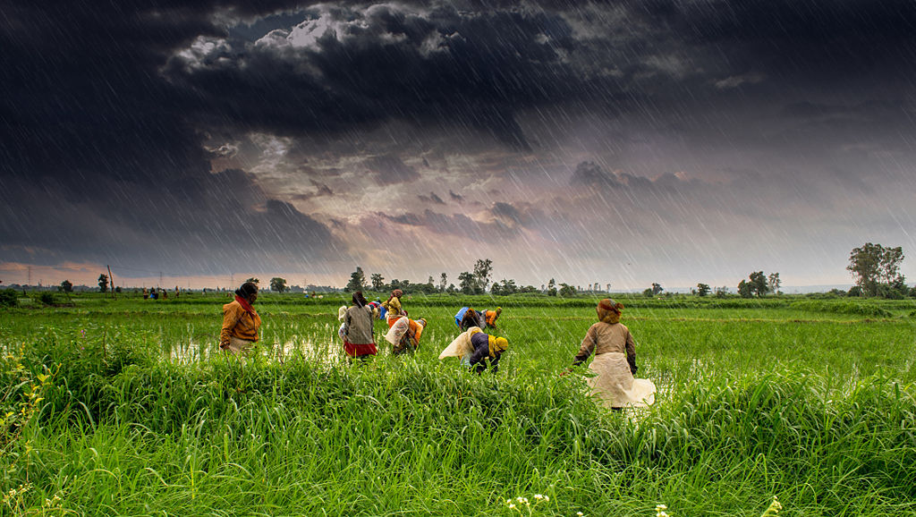 AIR Worldwide releases risk model to cover major crops in India against extreme weather