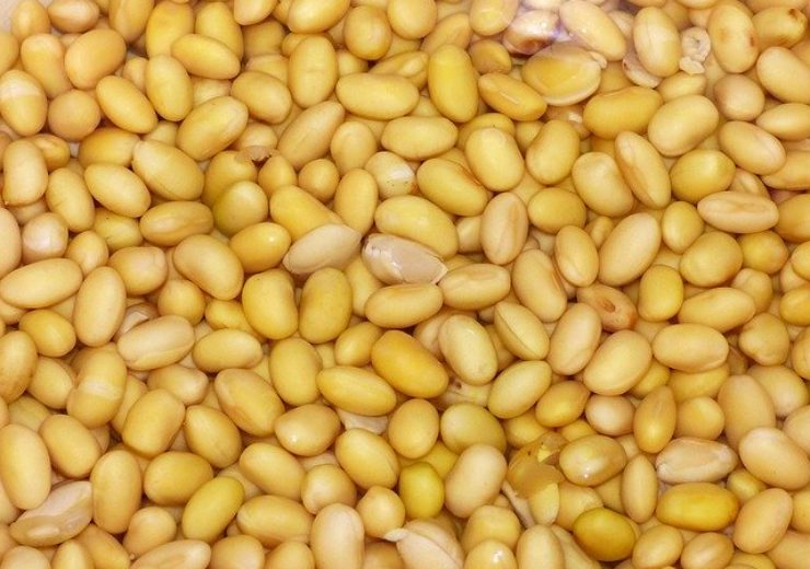 Verdeca gets Paraguay's approval for HB4 drought and herbicide tolerant soybeans