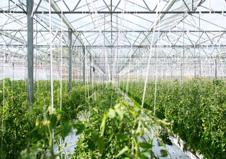 Indoor farming firm LettUs Grow secures £2.35m in seed funding