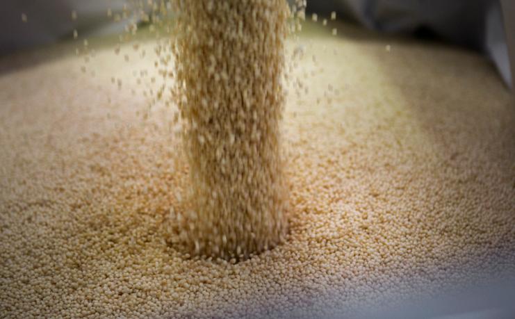 MATER-BI bioplastic is developed by Novamont for the production of soil-biodegradable mulching films. Credit:  Novamont.
