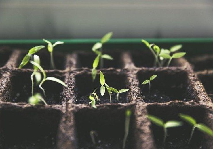 Bayer, Meiogenix partner to advance plant breeding and genome editing technologies
