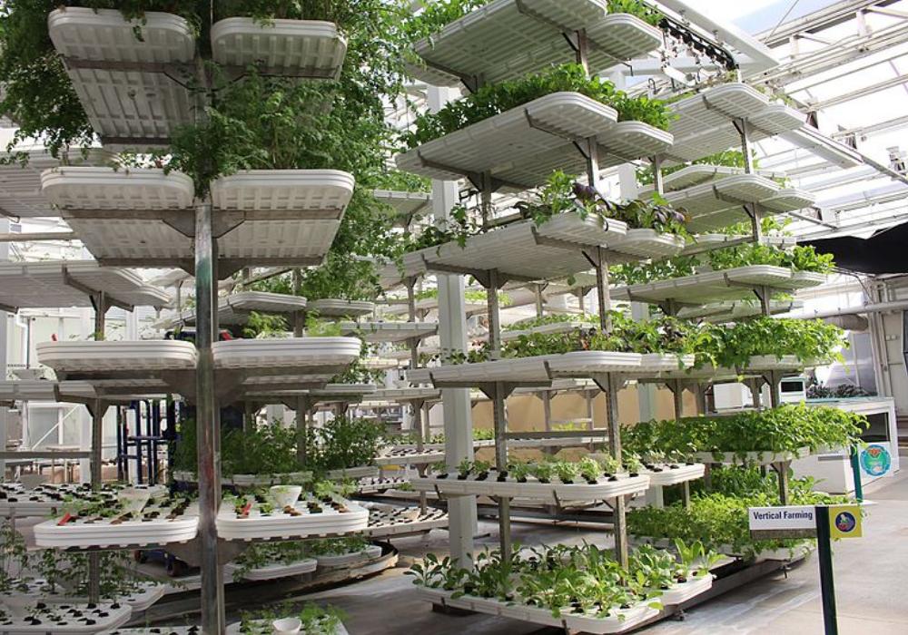Vertical farming companies