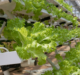Eight of the top vertical farming companies in the world