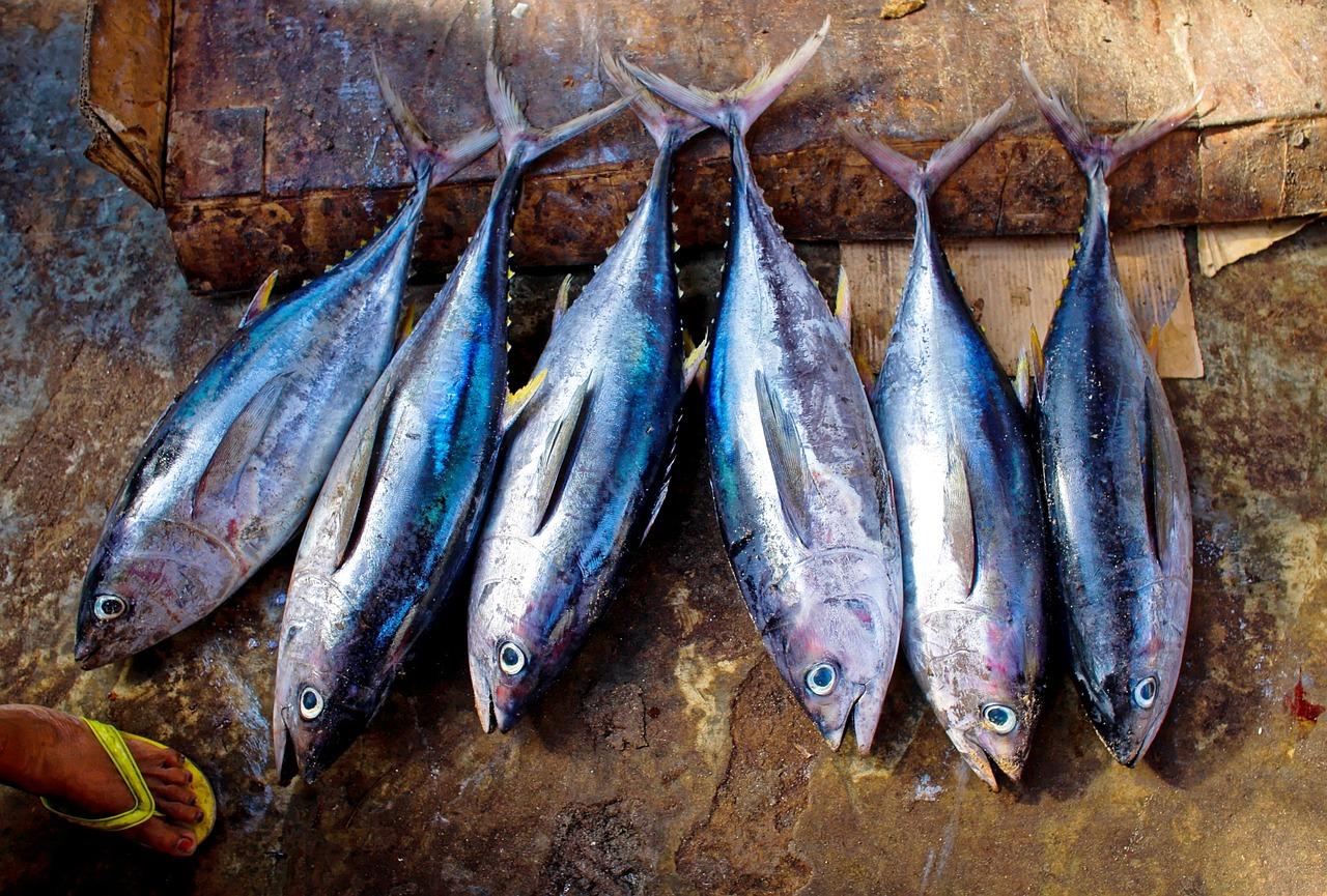 World Bank to support Kiribati's fisheries. (Credit: Pixabay/Kevin Phillips.)