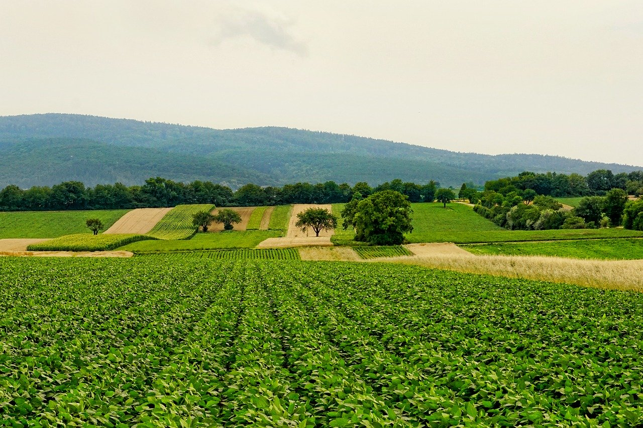 Image: World Bank supports China's foray into green agriculture. (Credit: Pixabay/Schwoaze.)