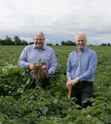 Country Crest has renewed potato contract with Tesco Ireland. (Credit: Country Crest)