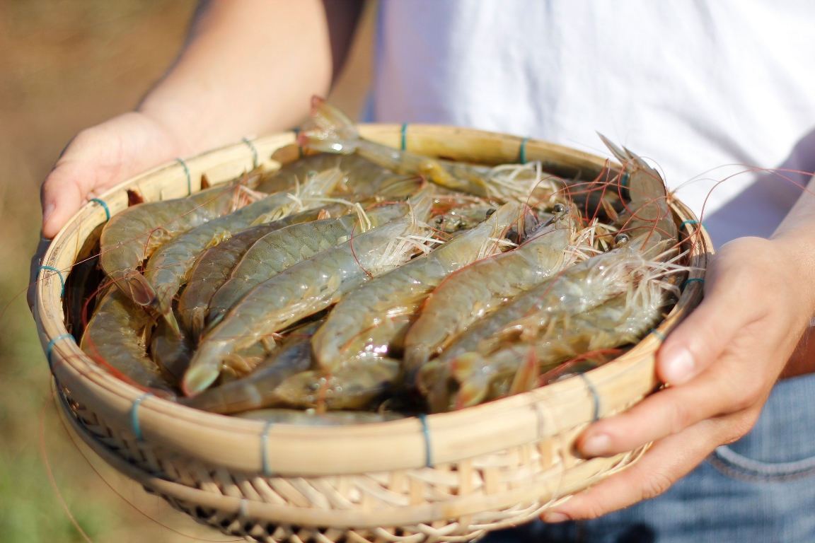 Bayer Animal Health solutions offers aquaculture technologies to help shrimp farmers enhance yield. (Credit: Bayer AG.)