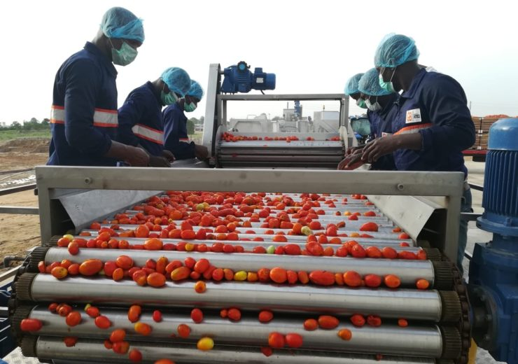 GBfoods Tomato Factory