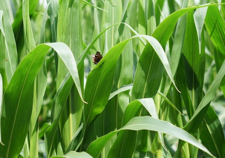 Corteva's Pioneer introduces mobile tool for pest, disease and deficiency detection in crops