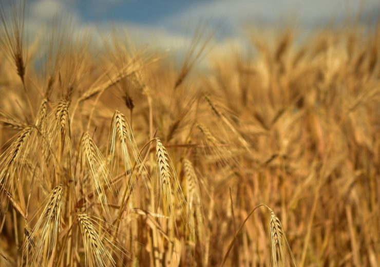 EBRD to provide €7m loan to Grain Alliance Group in Ukraine
