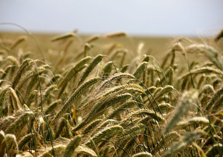 Sberbank to develop lending module for Russian Ministry of Agriculture