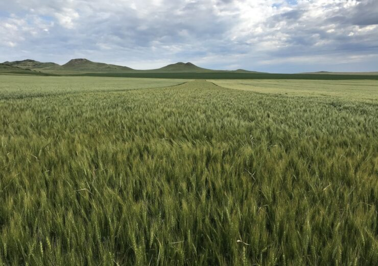 WestBred introduces new winter varieties of wheat in US