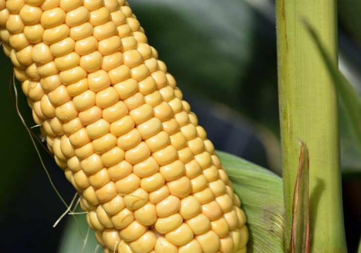 AMVAC launches two new products to control weed in corn