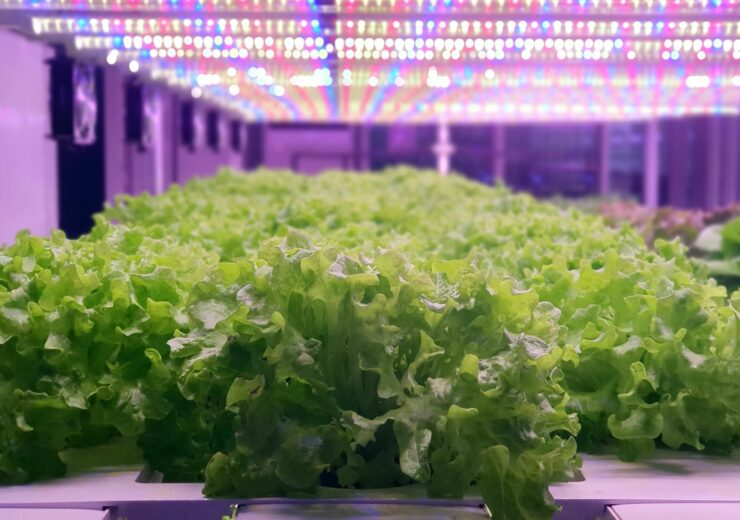 GrowGroup IFS, RainMakers to build world's largest indoor farm in Abu Dhabi