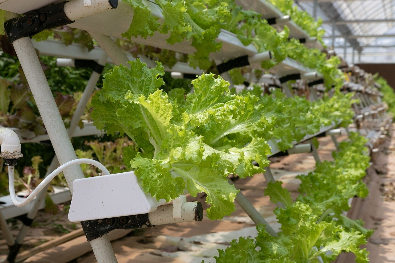Infarm secures $170m in funding to expand urban vertical farming network. (Credit: Pixabay/marsraw)