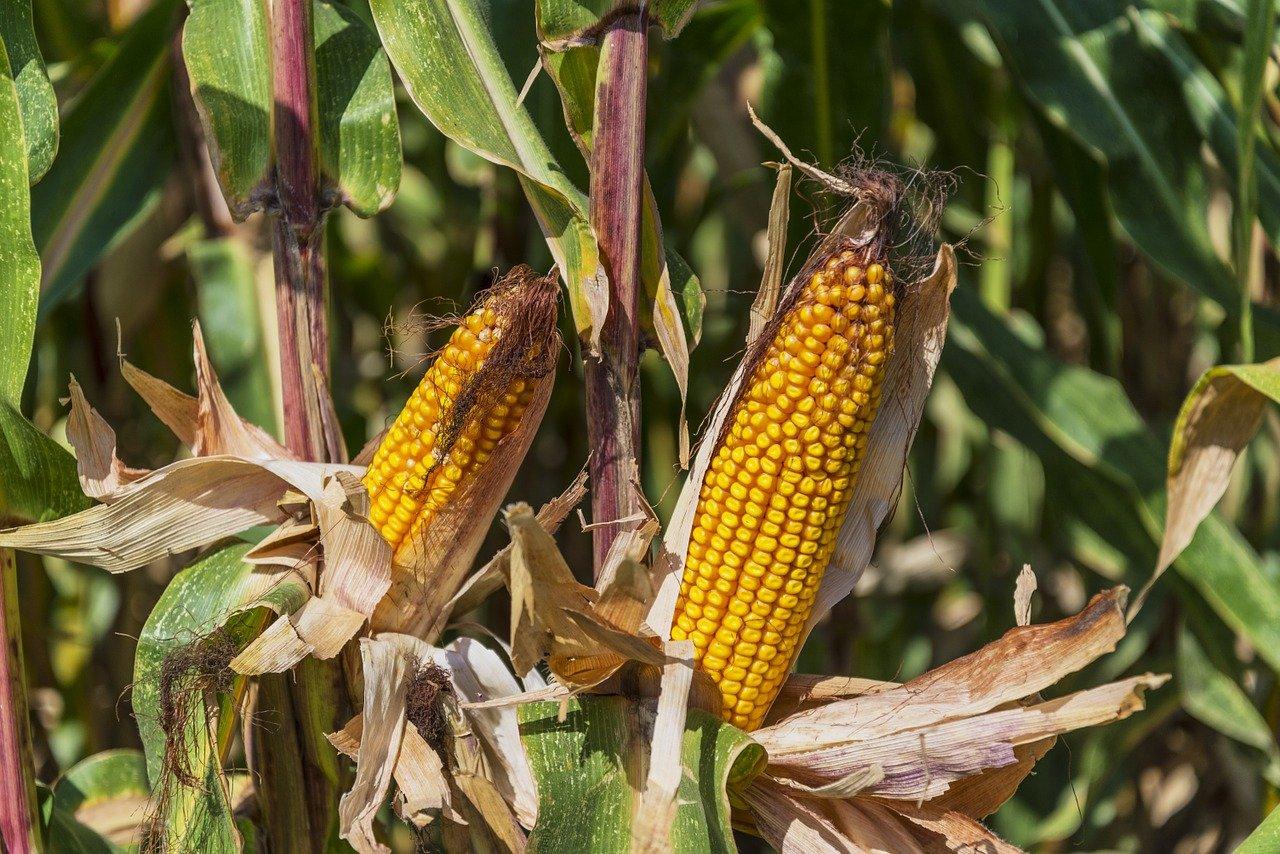 American Vanguard acquires crop input supplier Agrinos. (Credit: Jose Antonio Alba/ Pixabay)