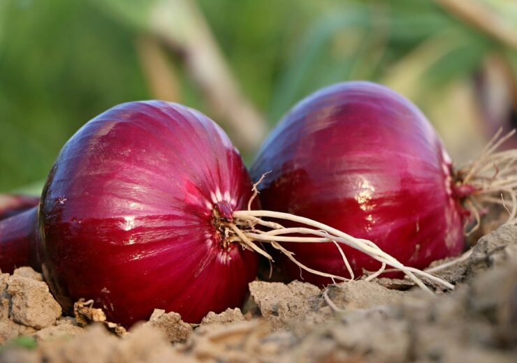 IFC, AATIF invest €13m in SAF Ingrédients' new onion processing plant in Senegal