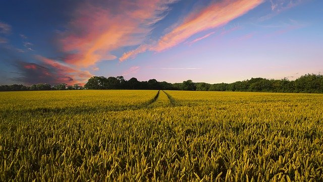 Pontifax AgTech closed second funding at $302m for food and agricultural sector. (Credit: Pete Linforth from Pixabay.)